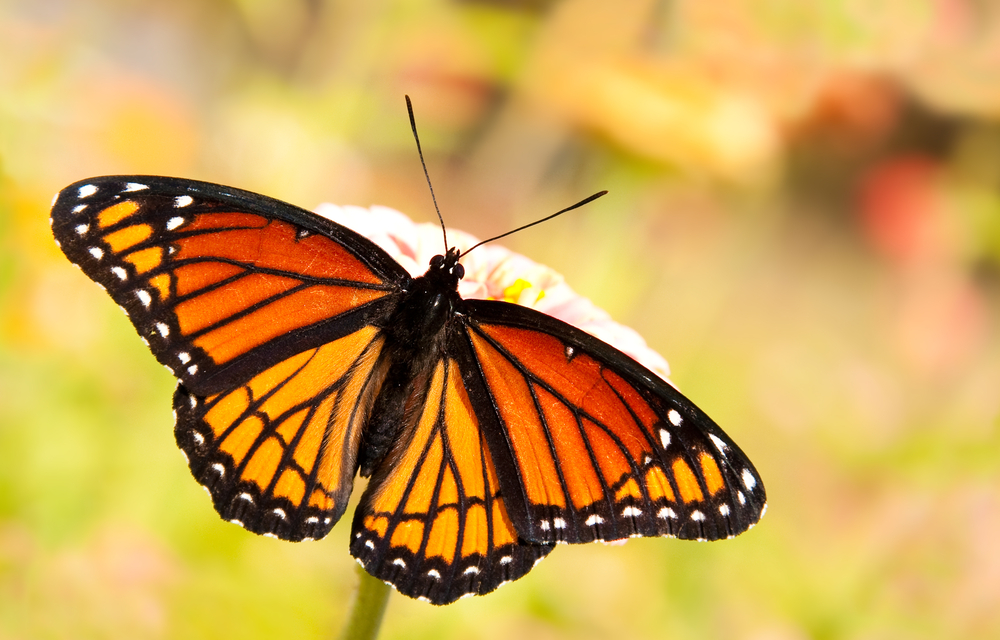 Real Life Butterfly Pictures Of Goals, Self-Love an...